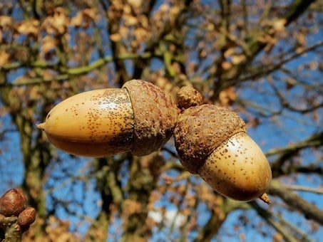 What causes low testosterone in men, pair of nuts